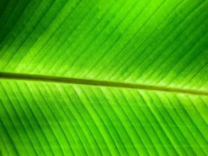 Postal: Simetría en una hoja verde