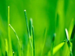 Ramitas de hierba verde