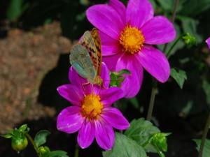 Postal: Mariposa sobre una flor púrpura