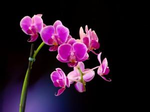 Una delicada orquídea violeta