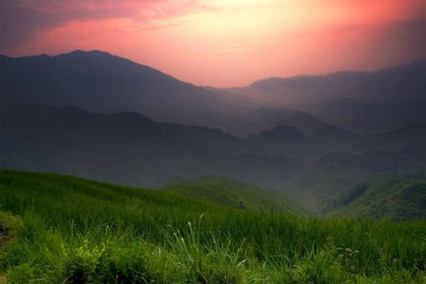 Campos de arroz en China