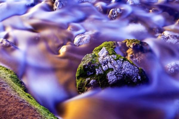 Una piedra en un arroyo, con brotes de musgo