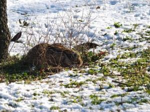 Una liebre en la nieve