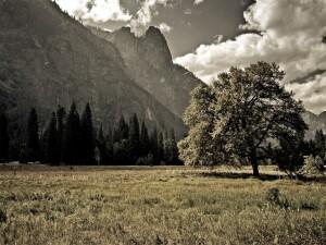 Postal: Tuolumne Meadows, Parque nacional de Yosemite, California