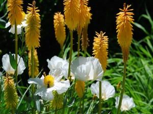 Rincón floral