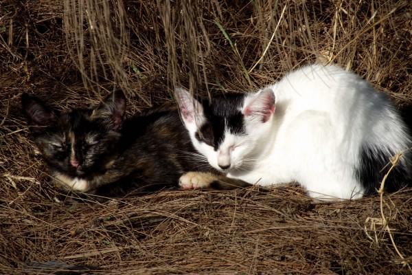 Gatitos durmiendo al sol de la mañana