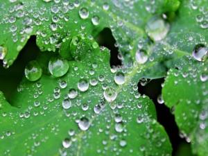 Postal: Perfectas gotas de agua en unas hojas verdes
