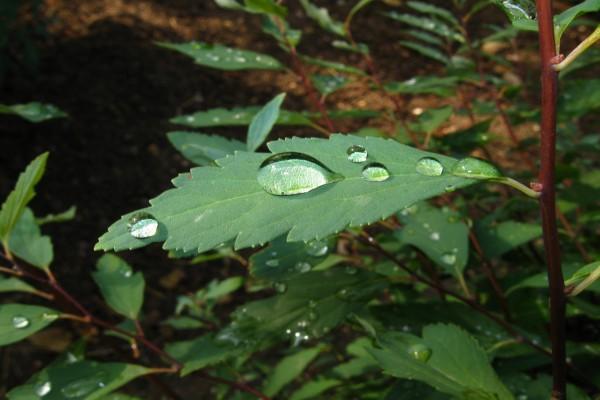 Gotas de agua sobre una hoja
