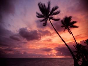 Postal: Palmeras sobre un cielo rojo, en Punta Cana, República Dominicana