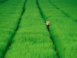 Un perro entre la hierba verde