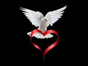 Paloma sobre un corazón