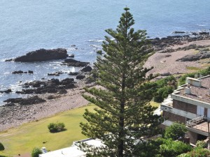 Postal: Un hermoso pino cerca del mar