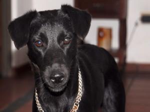 Un simpático perrito negro