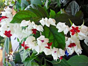 Florecillas blancas y rojas