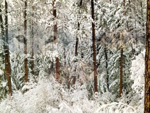Una gran nevada sobre los árboles