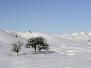Árboles solitarios en un paisaje nevado