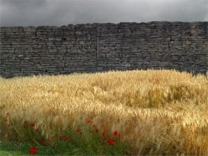 Trigo y amapolas junto a un muro de piedra