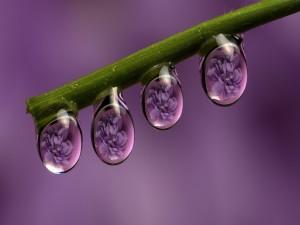 Flores reflejadas en las gotas de rocío