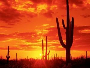 Postal: Cielo rojo en un desierto de Arizona