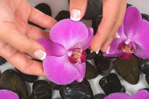 Delicadas florecillas moradas