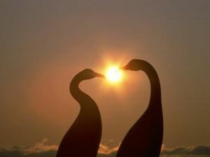 Postal: Amor animal, con el sol de fondo