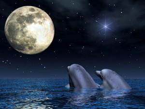 Postal: Delfines a la luz de la Luna