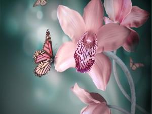 Postal: Mariposa sobre una orquídea rosa