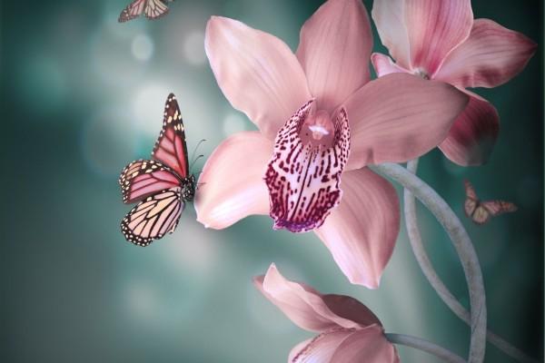 Mariposa sobre una orquídea rosa