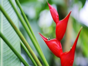 Postal: Exótica flor roja