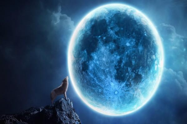 Lobo aullando en una noche de luna llena