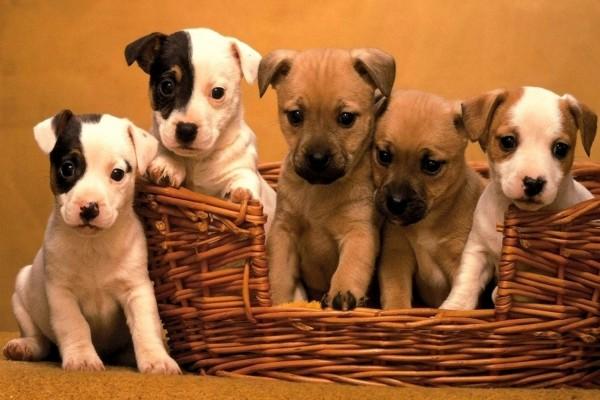 Cestita con cachorros