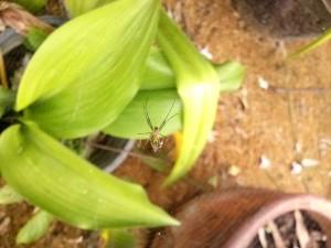 Araña en el centro de su tela