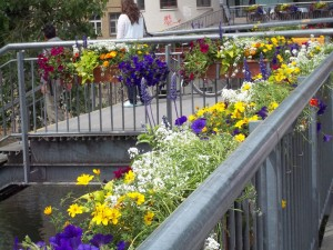 Maceteros con diferentes flores