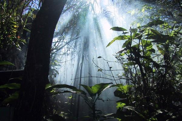 La frondosidad de la selva