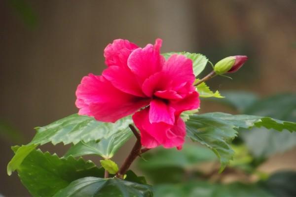 Un hermoso clavel