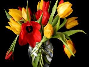 Postal: Tulipanes amarillos y rojos