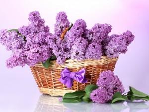 Postal: Flores lilas en una cesta