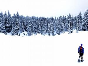 Postal: Trekking por la nieve