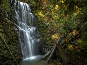 Postal: Berry Creek Falls, Parque Estatal de Big Basin Redwoods, California