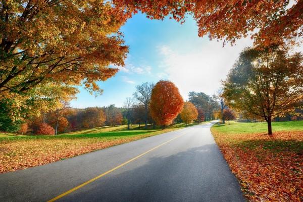 Carretera atravesando un paisaje verde