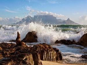 Una foca viendo romper las olas