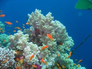 Banco de corales y peces naranjas