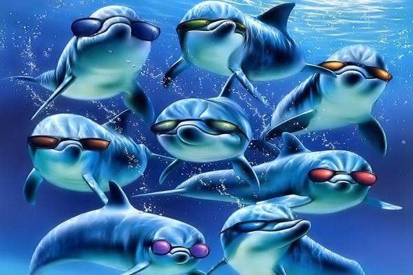Unos delfines muy marchosos