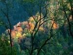 Copas de los árboles