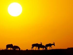 Postal: Grupo de topis bajo un sol ardiente