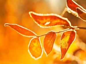 Hojas doradas a la luz del sol