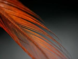 Pluma naranja
