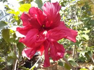 Postal: Flor de pétalos rosas