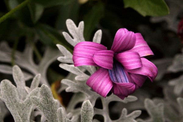 Flor de pétalos rizados