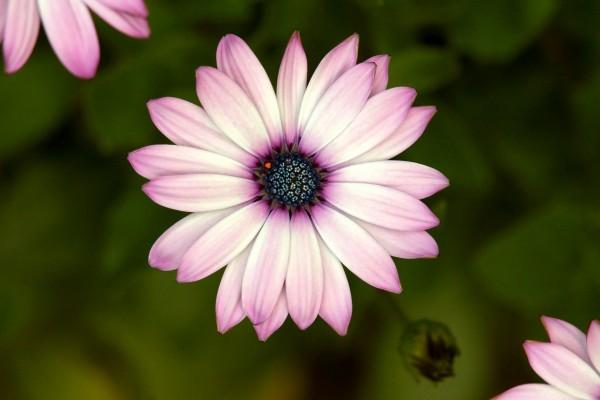 Primer plano de una preciosa flor